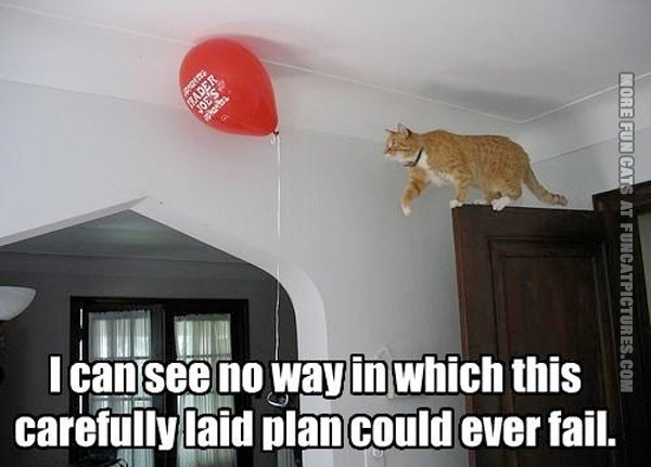 funny-cat-pics-cat-with-a-balloon-plan