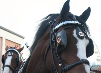 https://upload.wikimedia.org/wikipedia/commons/2/28/Horses_2.jpg